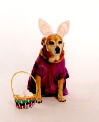 Chester the Easter Dog