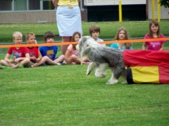 Agility Show at Whitney Point CEA School