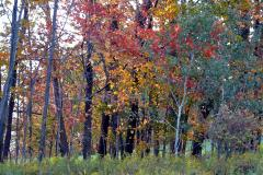 colorful fall trees in chenango county