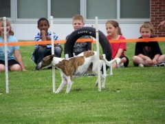 Agility Demo at Whitney Point CEA School