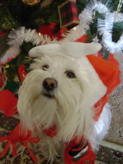 Bark.. Bark,,, Merry Christmas