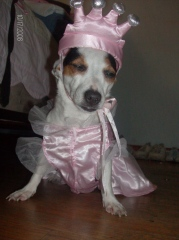 OUR DOG MINNIE DRESSED UP FOR HALLOWEEN