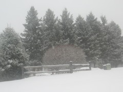 Snow in Newark Valley