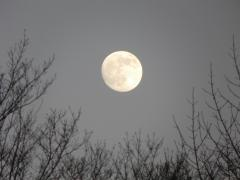 Full Lunar Eclipse to be 12/21/10