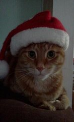My Santa Cat