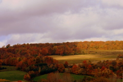 A wonderful fall vista