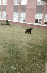 A bear cub visits a school.