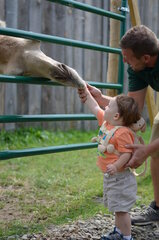 Feeding Max the Camel