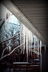 Sun shining through icicles
