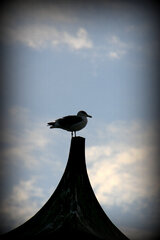 Bird on a Cupola