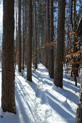 Snowshoeing the Finger Lakes Trail