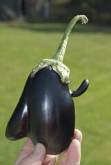 Unusual Shaped Eggplant