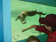 Ross Park Zoo Field trip