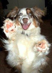 High Five from Zoey!