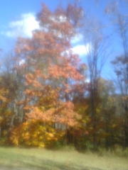 FALL COLORS IN CONKLIN