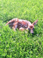 I met Bambi today