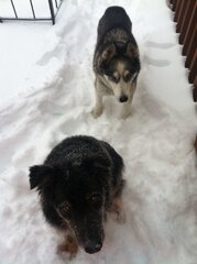 Sasha and Sadie enjoying the snow!