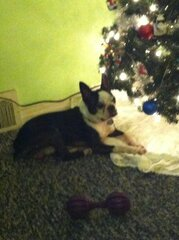 Cute little doggie next to his tree!