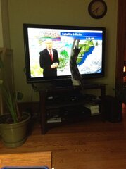 Cat's Frustration with Weather