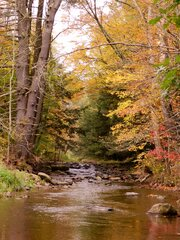 Indian Creek unadilla Fall