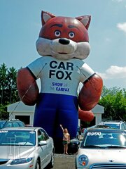 Giant fox in Apalachin