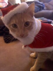 Benny dressed up like santa claus