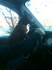 Dixie driving!