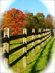 Fall Color along the Fenceline