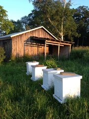 A look at the bee hives in the morning