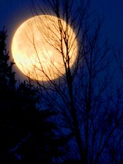 Winter Morning Moon Setting