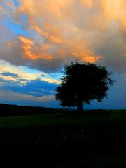 Lonesome Tree and Rainbow of Colors