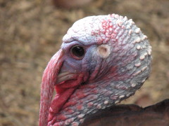 PROFILE OF TURKEY