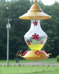 love my hummingbird's