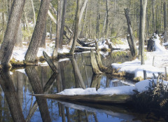 Bog in Winter, Chenango Valley State Park