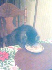TABBY CAT EATS TURKEY WITH US