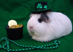 Athena McPig celebrates St. Paddy's Day!