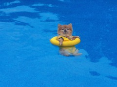 Staying cool in the Pool!