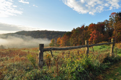 Foggy Fall Landscape