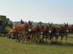 Work the Amish Farms