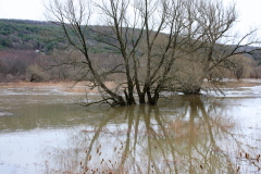 Otego Creek Flooding N. of Laurens