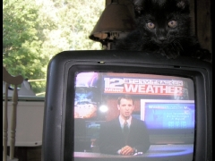 Black Cat Watching the Weather