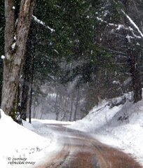 Snowy Road through the Woods