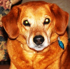 My dog Rusty
