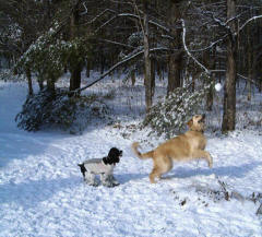 Pups Romp in the Snow