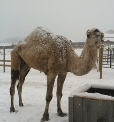 Hump Day Meets Snow Day