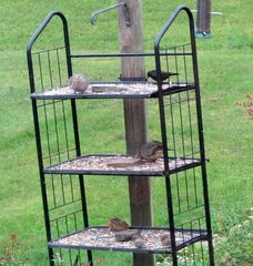New Way to Feed Birds