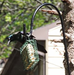 Loving the home-made suet!