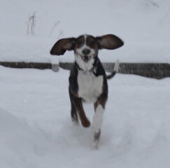 Thumper in the storm of Feb. 13,2014