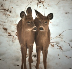 Snowy Day Visitors!