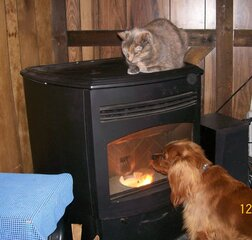 Tabby and Paddy find a warm spot